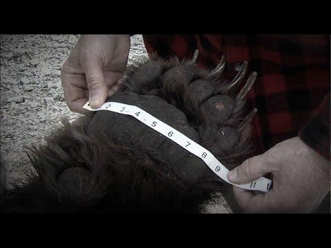 Winchester Legends S6E1 Alaskan Brown Bear