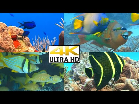 Deep sea Fish Relaxing video| Beautiful fishes| Ultra HD|1080p