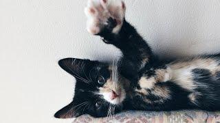 CUTE KITTEN CUDDLE - Emma The Kitten