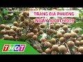 Trang tin địa phương | 10/01/2019 - Huyện Châu Thành | THDT thumbnail