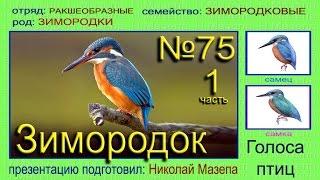 Зимородок. Голоса птиц