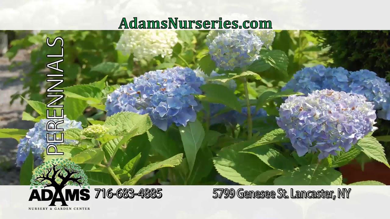 Welcome To Adams Nursery U0026 Garden Center