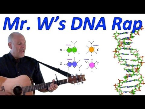 DNA, Fantastic! Mr. W's DNA Rap