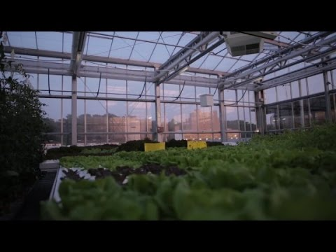 Urban Farmers - Rooftop Farms