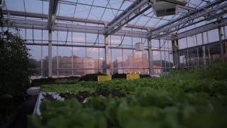 Urban Farmers - Rooftop Farms