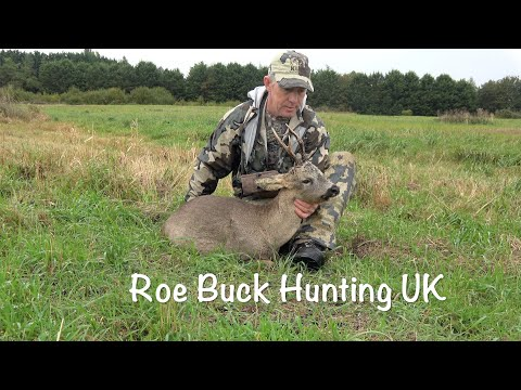 Roe Buck Hunting, UK.