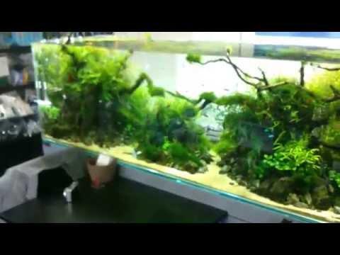AquaRevue - Nature Aquarium shop, Japan, Nagoya