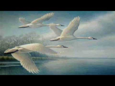 """The Wild Swans at Coole"" by W.B. Yeats (read by Tom O'Bedlam)"