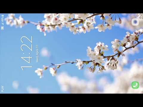 Cherry Blossom Live Wallpaper PRO - Apps on Google Play - cherry blossom animated