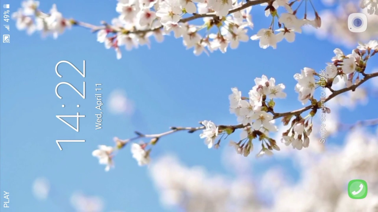 Cherry Blossom Live Wallpaper Youtube