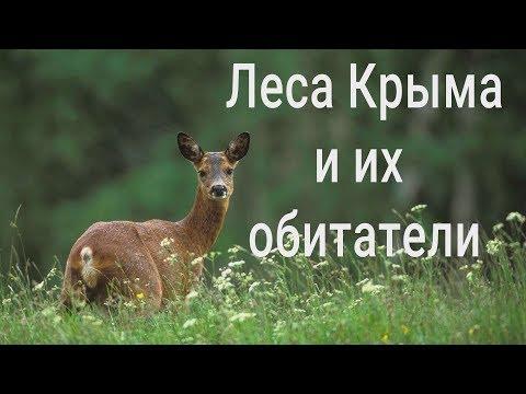 Крым: дикие звери. Популяция растёт