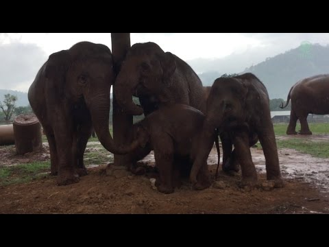 Three Elephants Want Baby Go To Sleep