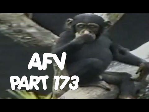 ☺ AFV Part 173 - (Funny Clips Fail Montage Compilation) | OrangeCabinet