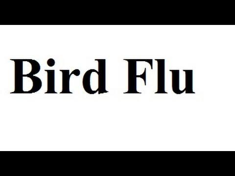 Signs & Symptoms of Bird Flu in Humans