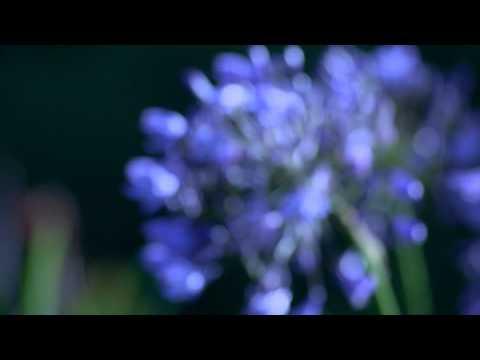 100 Flowers In Bloom David Bridie