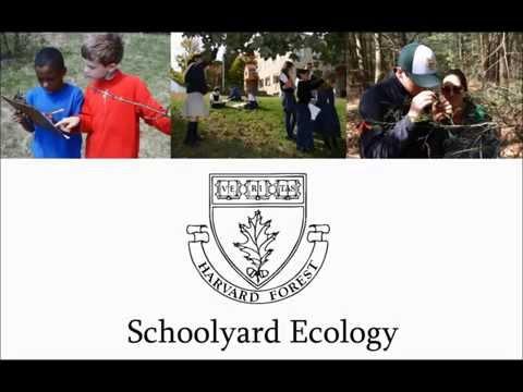 Harvard Forest Schoolyard Ecology Program: Help Us Grow