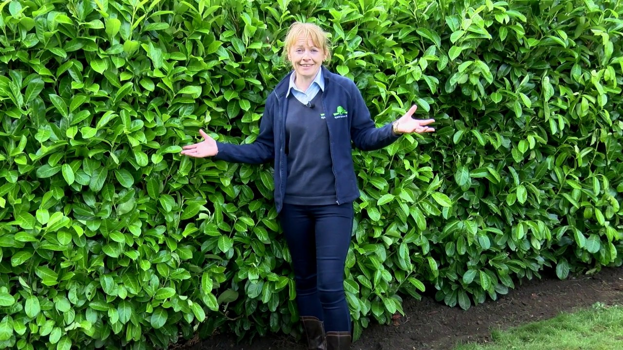 How To Plant An Instant Hedge Youtube
