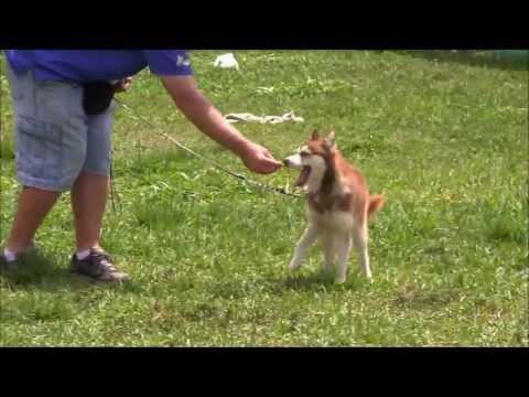 DOG TRAINING TIP: How to Train an anti-social dog using 'dog psychology'