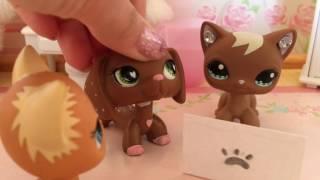LPS:  Valentine's Day Special! 💗 |  lps kitkat ♡