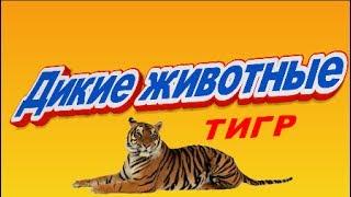 🐯 Дикие животные Тигр 🐅