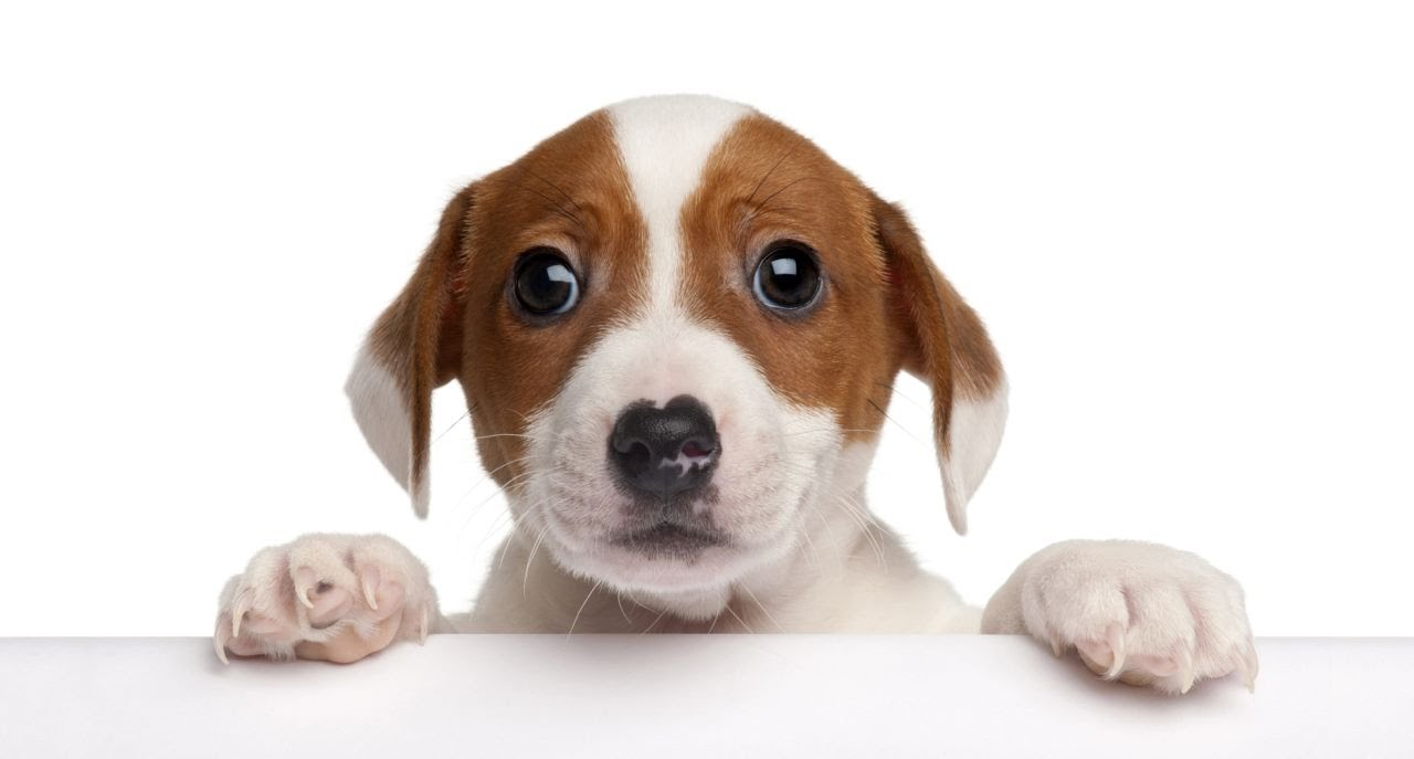 Het Hondje Zegt Waf
