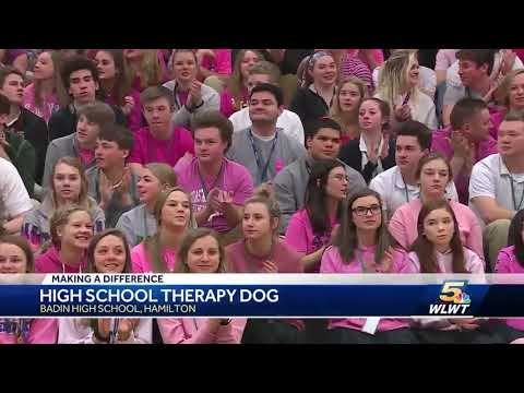 Badin HS gets resident therapy dog