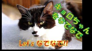 福岡県古賀市にある里親募集型保護猫カフェ【CafeGatto】. 猫たちのお部...