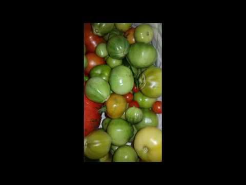 confiture-de-tomate-verte
