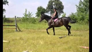 Konie - moja pasja by Amelia