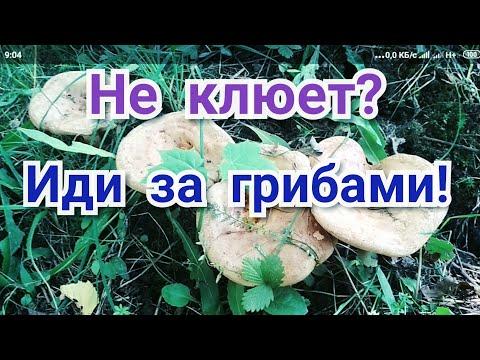 Откуда в грибах червяки?