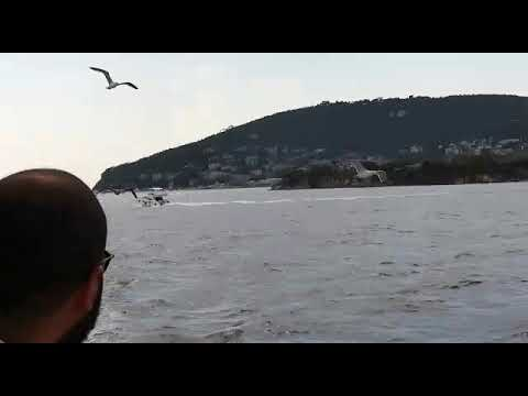 Istanbul Princes Islands Libyan with Seagull