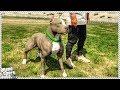 GTA 5 REAL LIFE MOD #15 - Taking Pit Bull For Walk! (Custom New Dog Breed in GTA 5 PIT BULL)