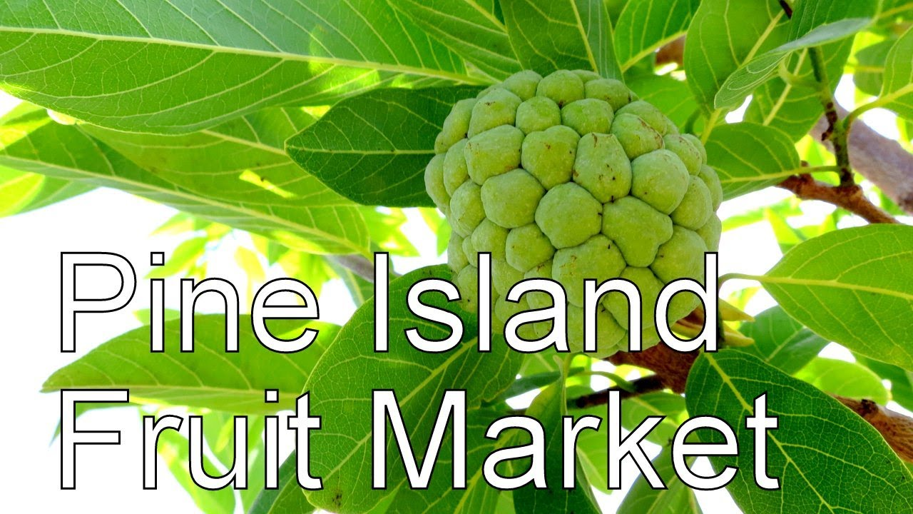 A Trip to the Pine Island Fruit Market in Florida