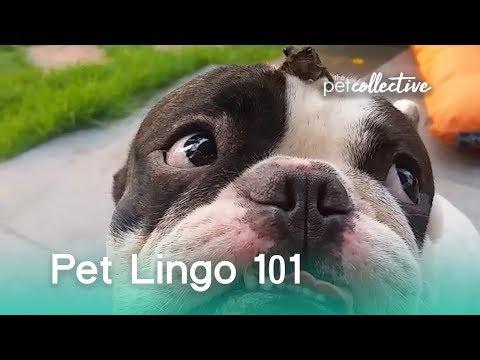 Pet Lingo 101 | The Pet Collective