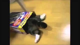 Funny cats compilation - Funny cat videosFunny Cats - Best 2015