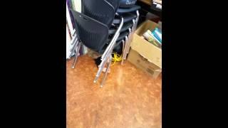 Chair birth