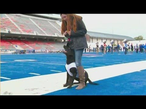 Photos - Boise State football team sideline retriever