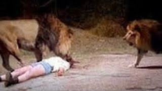 Lion attack human best compilation Ever 2017-Shocking video