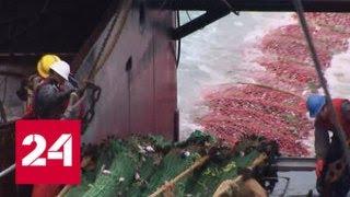 Торговые войны США и Китая: на Аляске разоряются рыболовные хозяйства - Россия 24