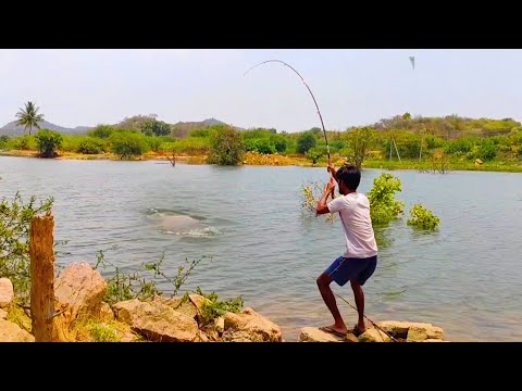 Incredible fishing    Most amazing fish hunting    Fish catching video    🎏🎣#Fishing Time    #Hunt