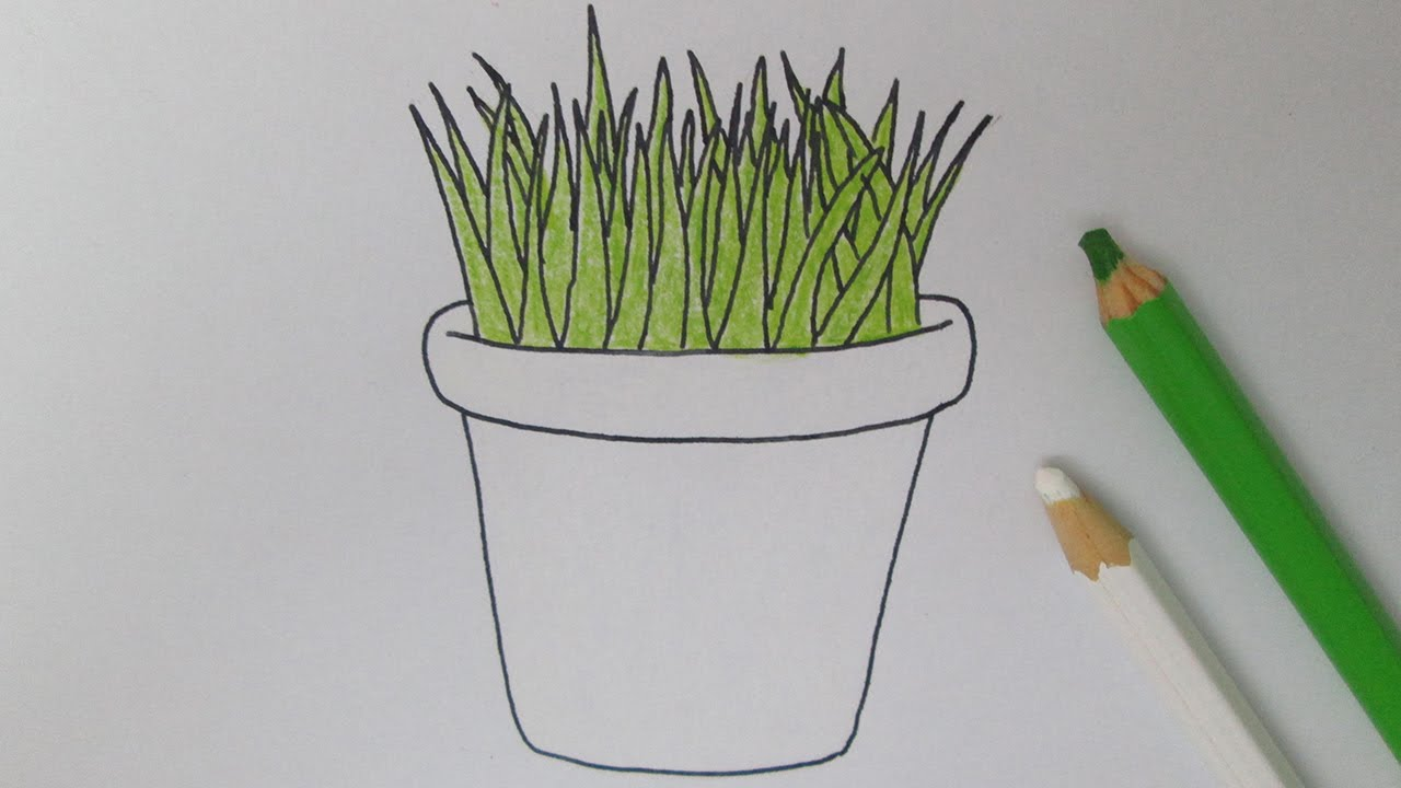 Cómo dibujar una planta en maceta - YouTube