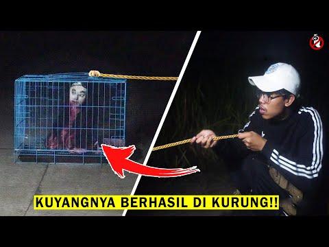 BERHASIL TANGKAP KUYANG KRASUE !! Part 3