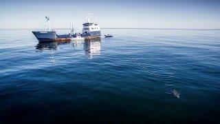 Costa + OCEARCH: Tagging Miss Costa Shark