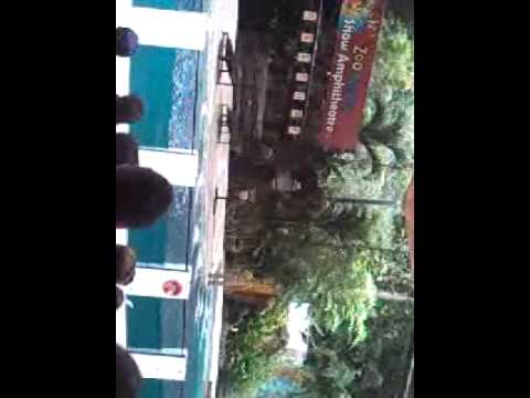 Zoo Negara Malaysia....Live Show  Seal