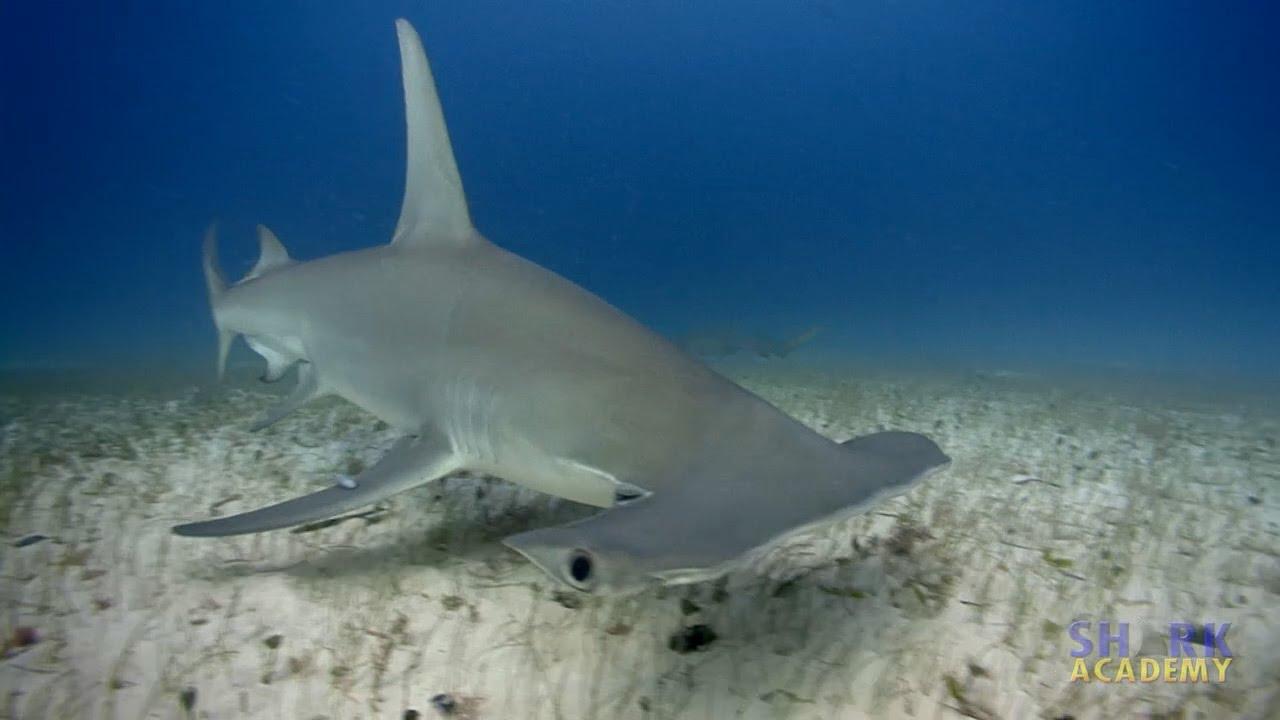 Wobng Carpet Shark Video - Carpet Vidalondon