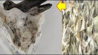 Terbongkar! Rahasia Sukses Budidaya Ternak Burung Walet Rumahan Bagi Pemula