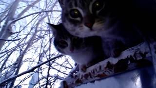 Бродячие коты почуяли запах пельменей