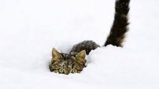 Giuliano e la neve 2013 Thumbnail