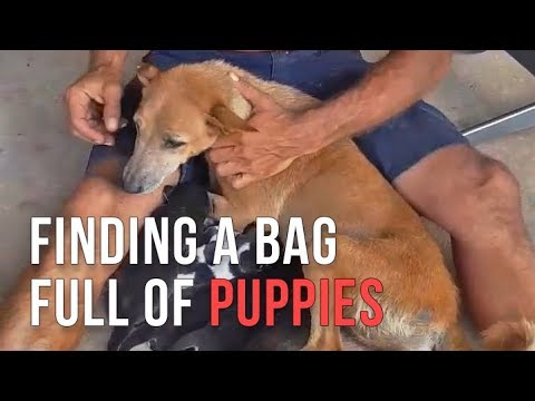 Michael found a plastic bag full of puppies on the road and saved them all