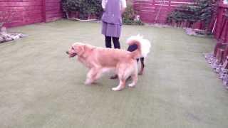 看板犬のスーちゃんと交流させていただきました。私達も初めての体験で...